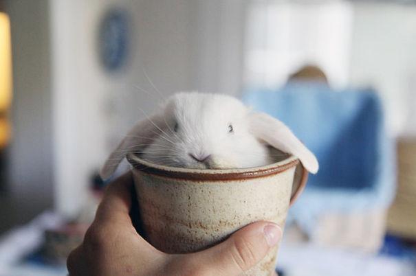 coelhos mais fofos (9)