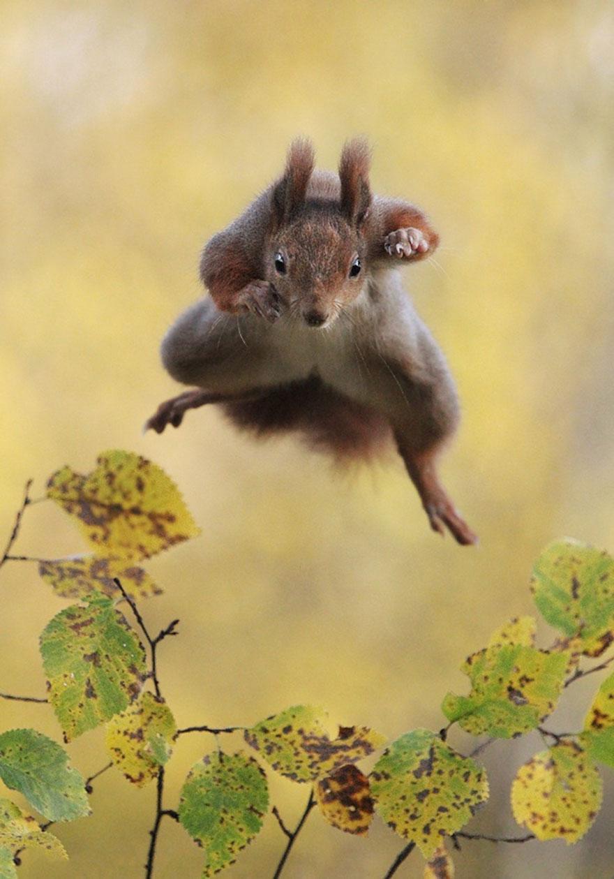 https://i1.wp.com/hypescience.com/wp-content/uploads/2015/12/concurso-fotos-engracadas-vida-selvagem-8.jpg