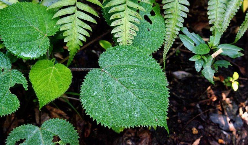 plantas malevolas 4