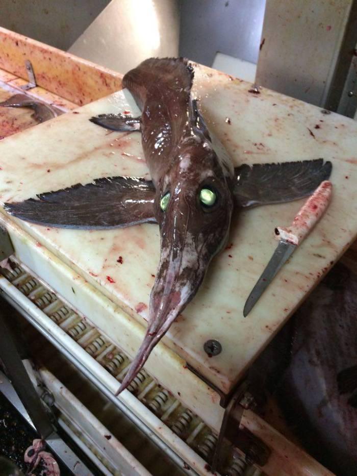 criatura-alienigena-de-olhos-verdes-assusta-pescadores-1
