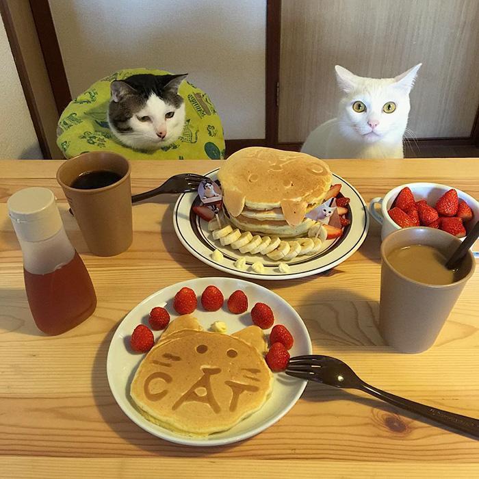 https://i1.wp.com/hypescience.com/wp-content/uploads/2016/03/gatos-ver-seus-donos-comerem-13.jpg