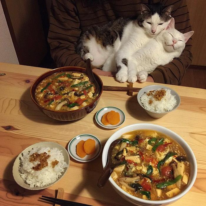 https://i1.wp.com/hypescience.com/wp-content/uploads/2016/03/gatos-ver-seus-donos-comerem-3.jpg