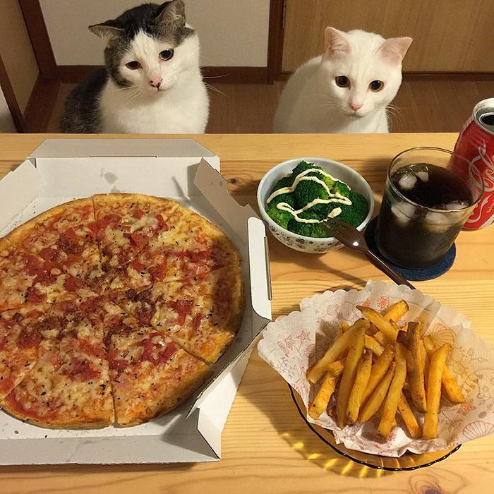 https://i1.wp.com/hypescience.com/wp-content/uploads/2016/03/gatos-ver-seus-donos-comerem-4.jpg