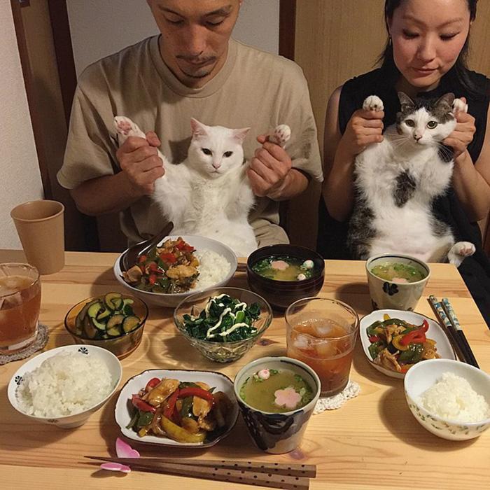 https://i1.wp.com/hypescience.com/wp-content/uploads/2016/03/gatos-ver-seus-donos-comerem-5.jpg