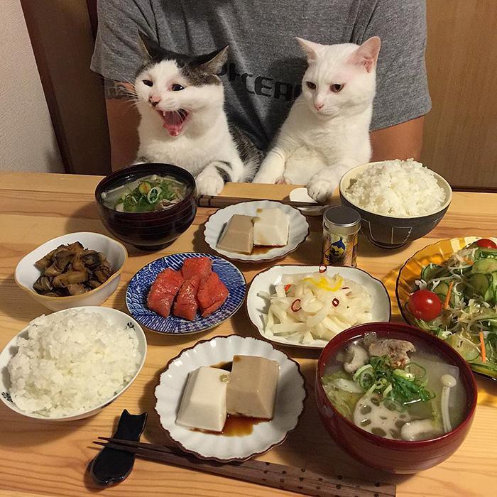 https://i1.wp.com/hypescience.com/wp-content/uploads/2016/03/gatos-ver-seus-donos-comerem-7.jpg
