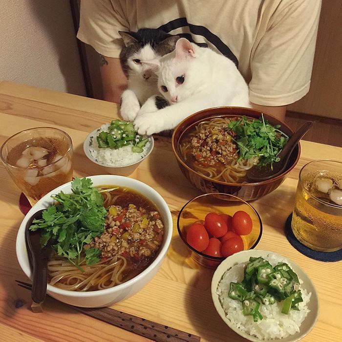 https://i1.wp.com/hypescience.com/wp-content/uploads/2016/03/gatos-ver-seus-donos-comerem-8.jpg