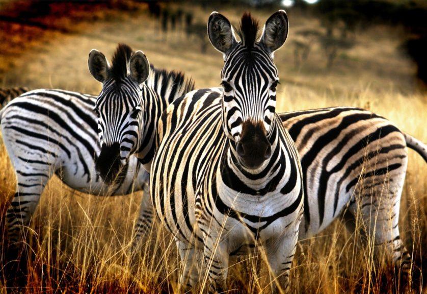 mitos sobre animais 10