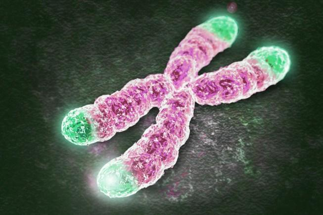 reverter envelhecimento celulas telomeres