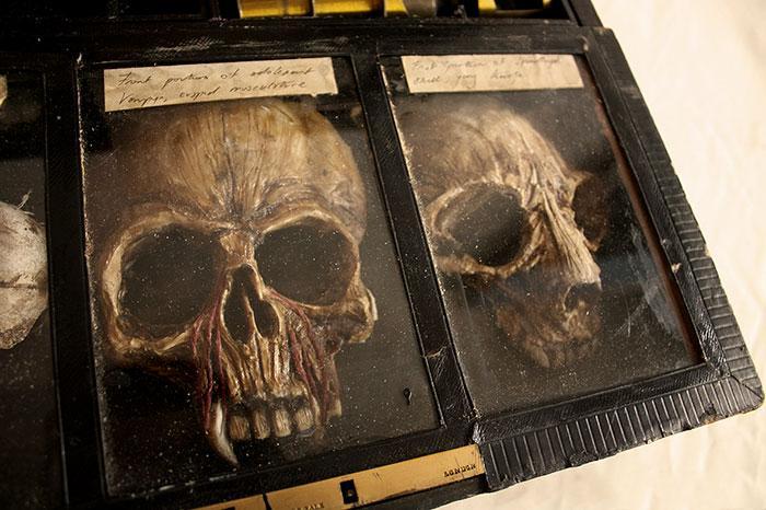esqueletos criaturas fantasticas esculturas alex cf (2)