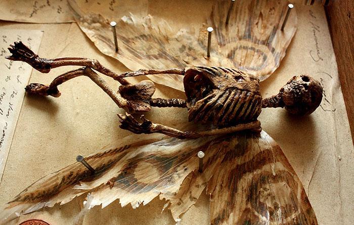 esqueletos criaturas fantasticas esculturas alex cf (9)