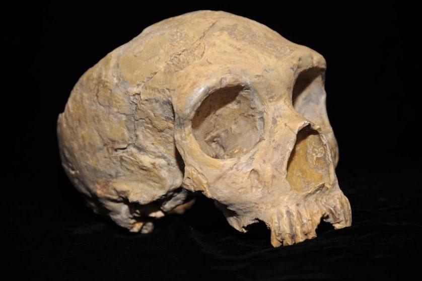 neandertais 9