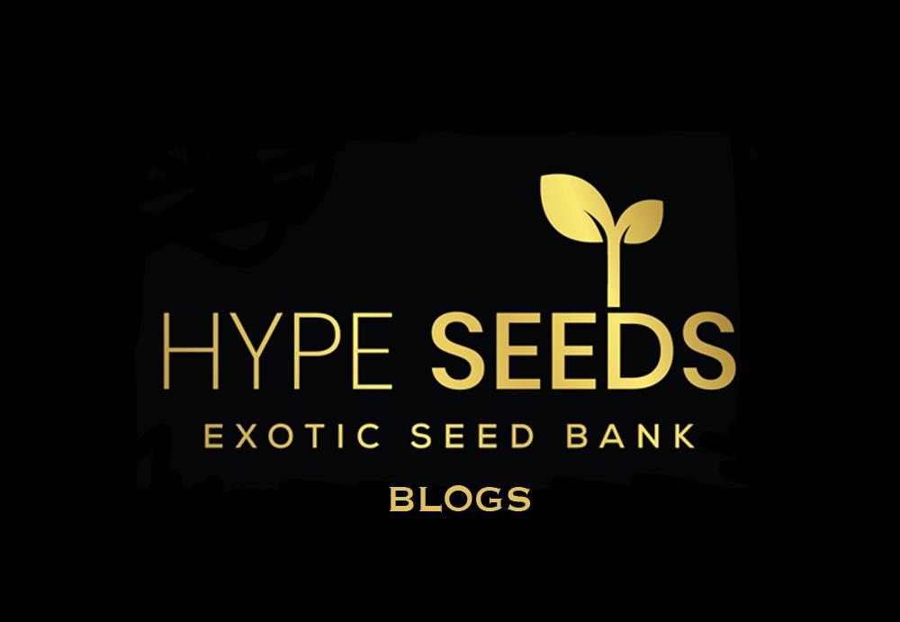 hype seeds blog
