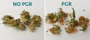 pgr vs no-pgr