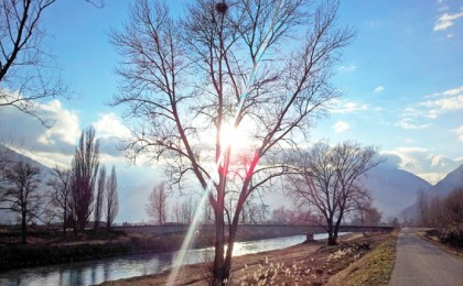message de l'arbre
