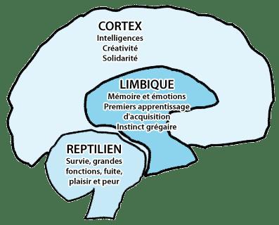 Le Cerveau tri-unique