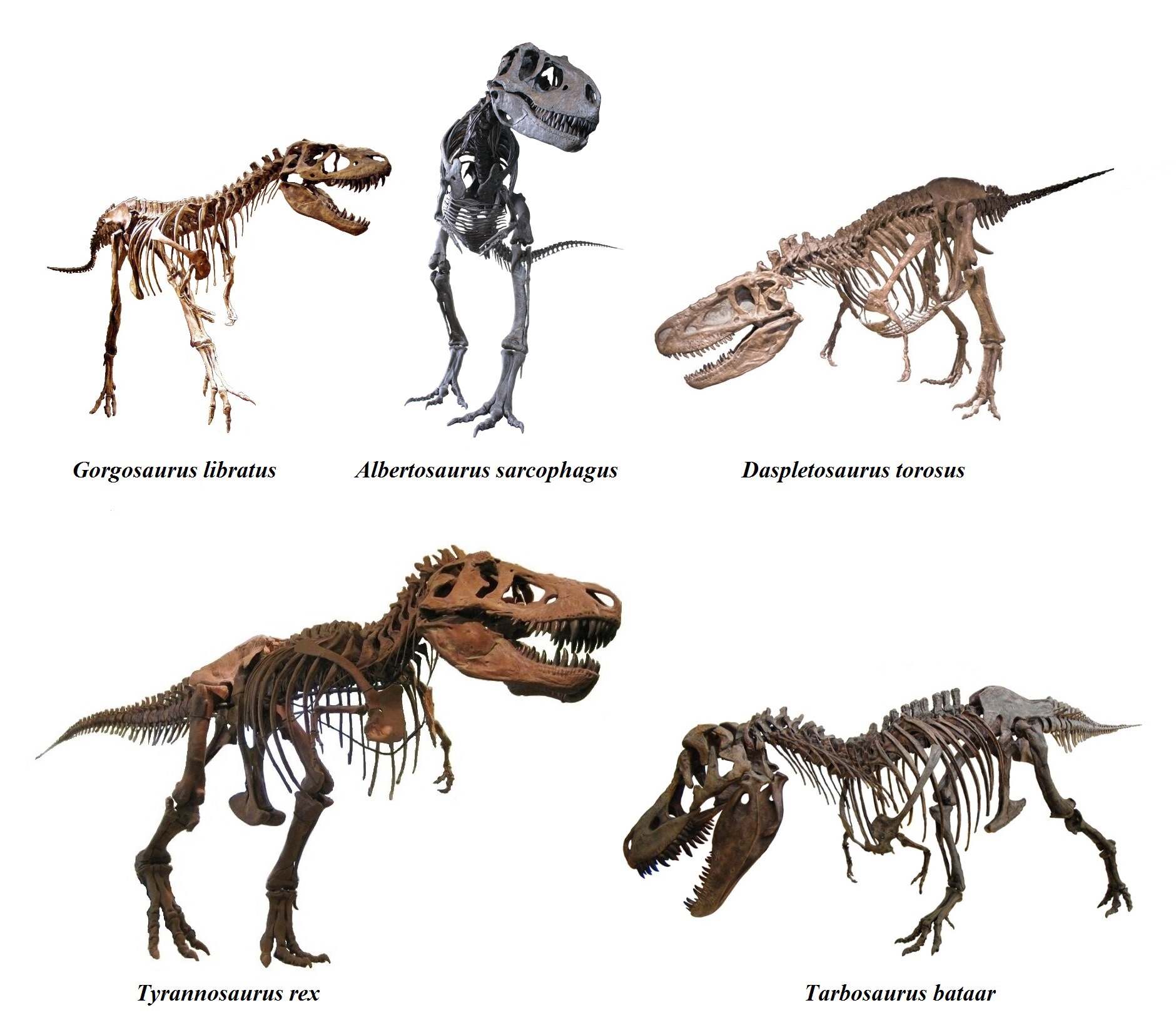 Putredosaurus Rex A New Theory On The Ergonomics Of