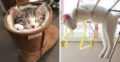 5 Cats Demonstrating that Cats can Sleep Anywhere