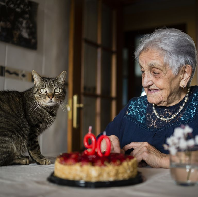 image result of cat on birthday