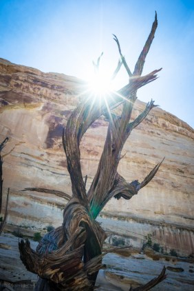 Wild Horse Canyon