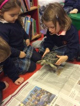 Tortoise (4)