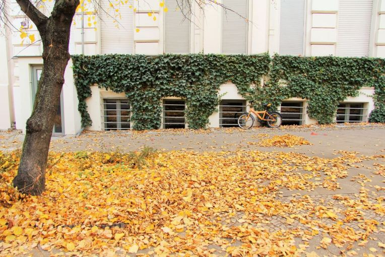 autumn berlin strassburger strasse