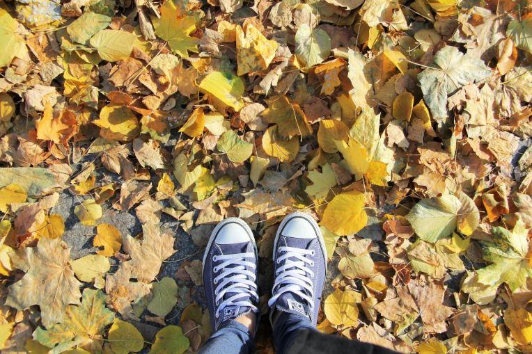 converse sous les feuilles d'automne