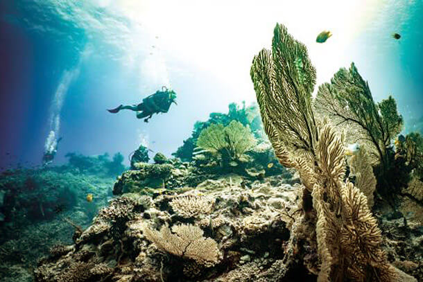 Top 10 Islands World Fiji diving mecca