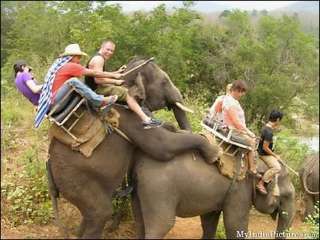 top 10 funny tourist snapshots tourists india elephants fucking