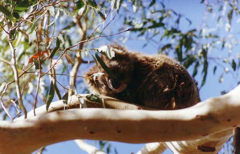 7 Things we did in Victoria Australia