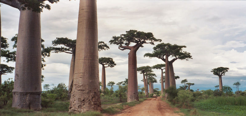Avenue of the Baobabs Latitude Longitude