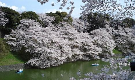 Disappointing Travel Destination Sakura bloom Japan