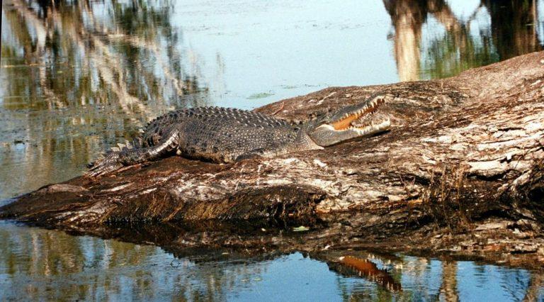 Favorite Part Kakadu National Park