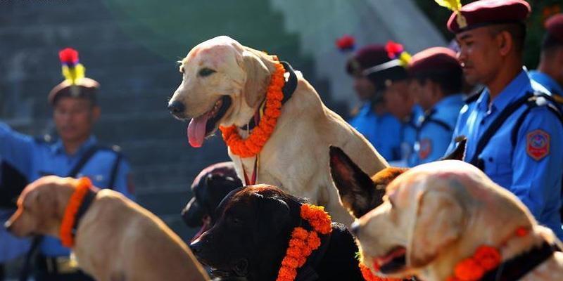 dogfestival nepal