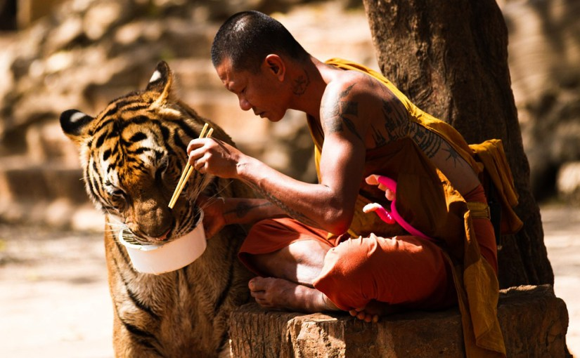 Tiger Temple raided and closed