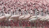 Weird Places Lake Natron Tanzania