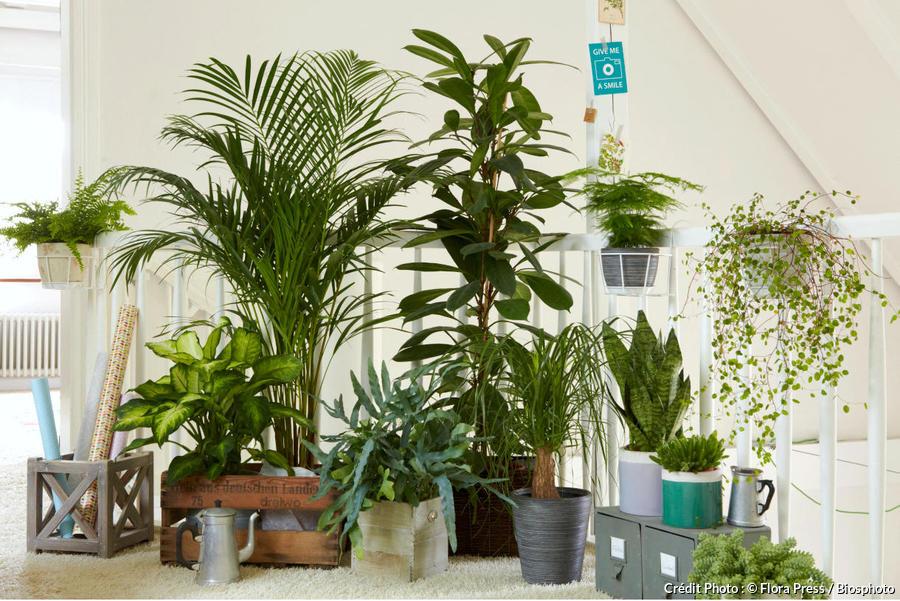 les 12 plantes vertes d interieur les