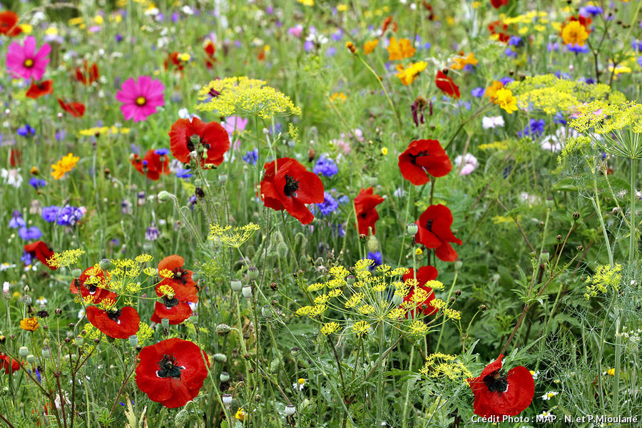 semer un tapis de fleurs detente jardin