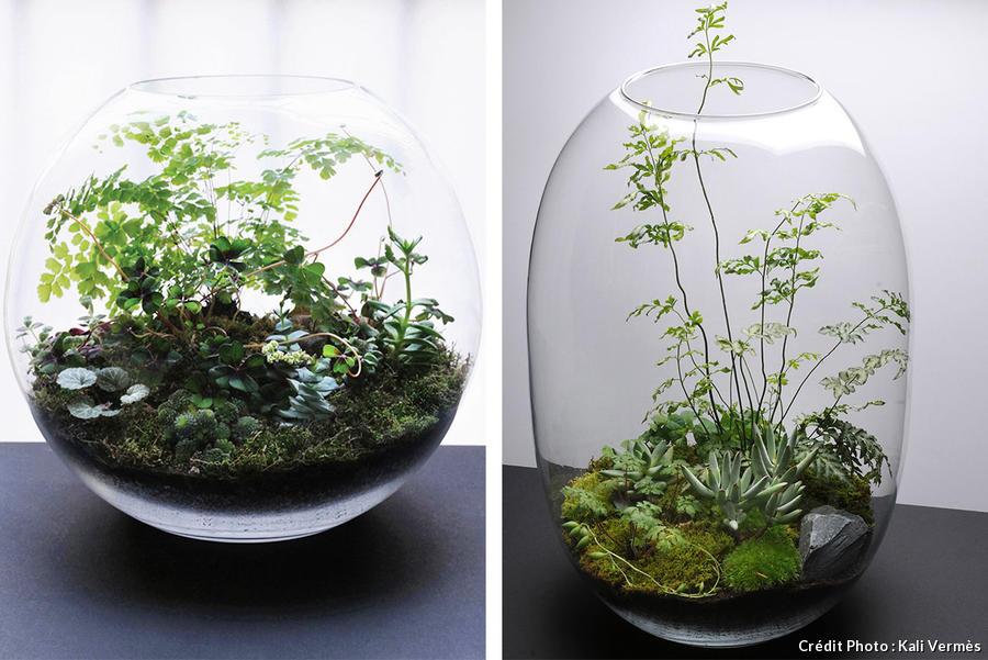 Le décor du terrarium