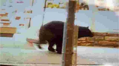 Trước đó camera an ninh ghi hình một con gấu đi lạiở trung tâm thành phốGatlinburg khiến đám đông hoảng sợ. Ảnh:Knoxville News Sentinel.