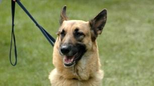 Hund 1 SR