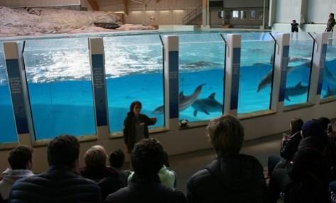 Kolmården-Hos delfinerna 475