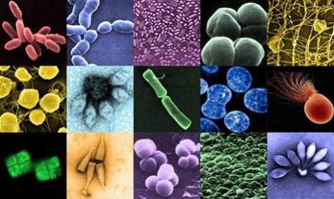 Archaea 475