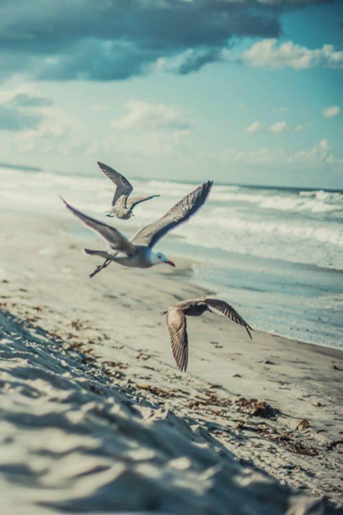 Beautiful sea birds