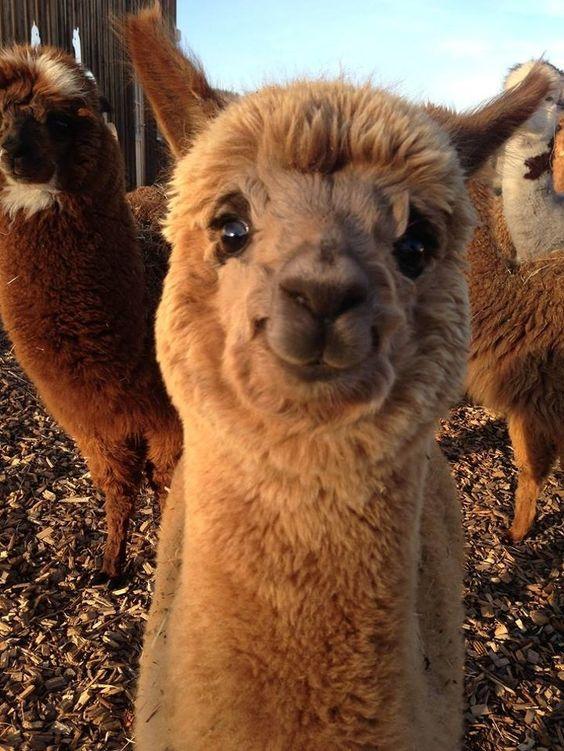 21 απίστευτα γλυκά ζωάκια που θα λατρέψεις (Μέρος 2ο)