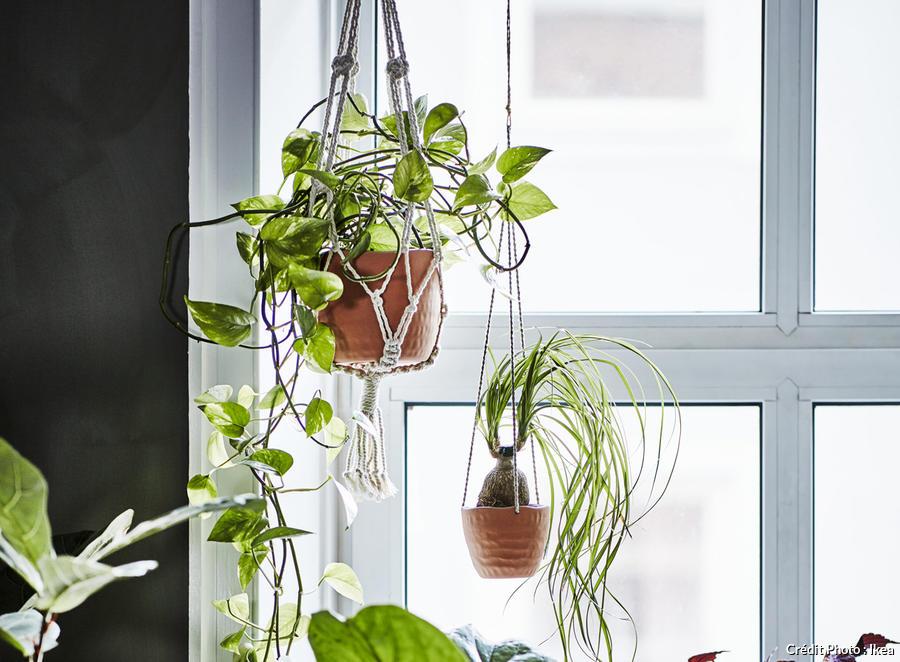 comment accrocher vos plantes maison
