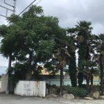 山梨県の空き地にある樹木の伐採