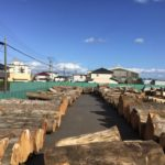 伐採の料金相場と料金目安