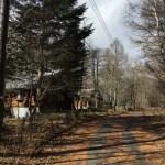 別荘の周囲にある樹木の伐採