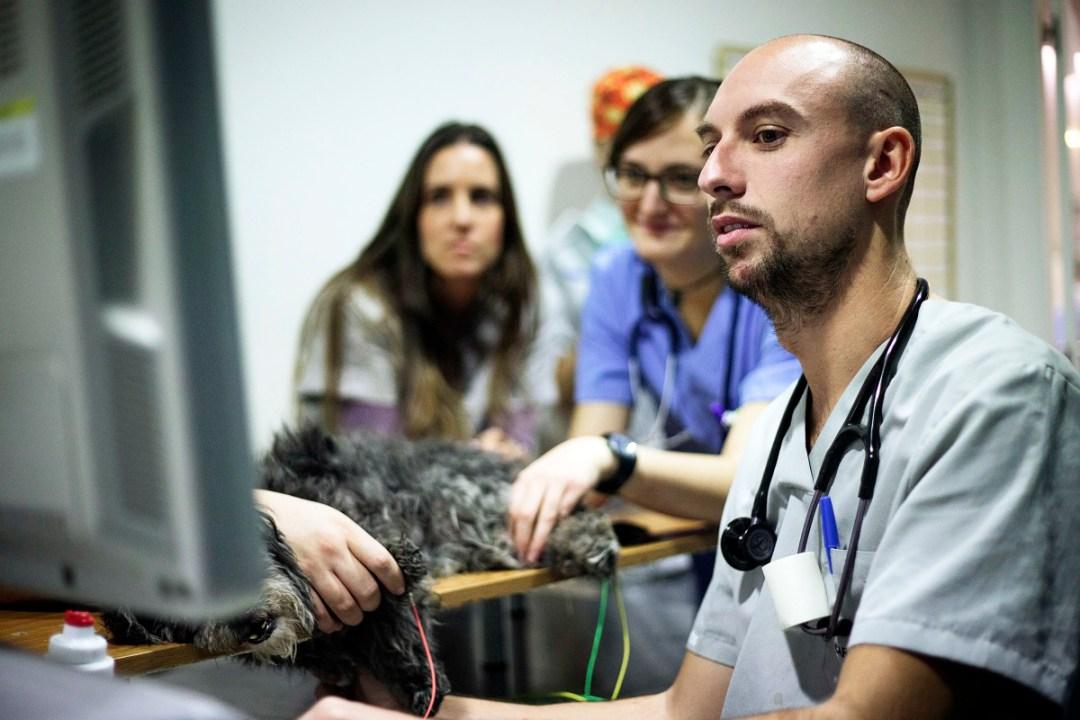Auxiliar de quirófano ayudando a veterinaria