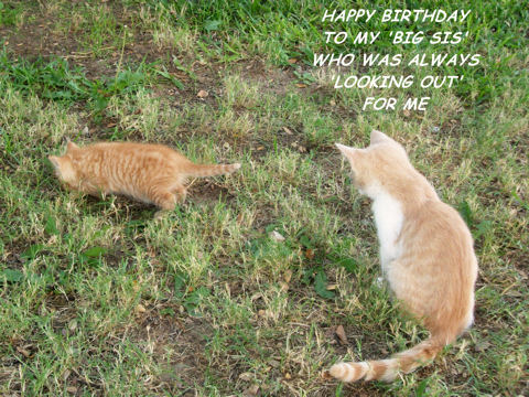 Birthday For Big Sister Kittens Free For Brother Amp Sister ECards 123 Greetings